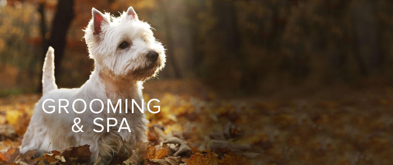 Dog Kennels In New Bern North Carolina